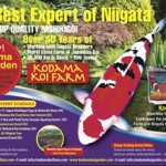 Home lone star koi club houston texas for Kodama koi garden