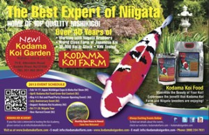 Club sponsors lone star koi club houston texas for Kodama koi garden